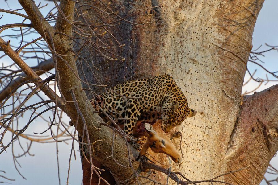 eating in tree