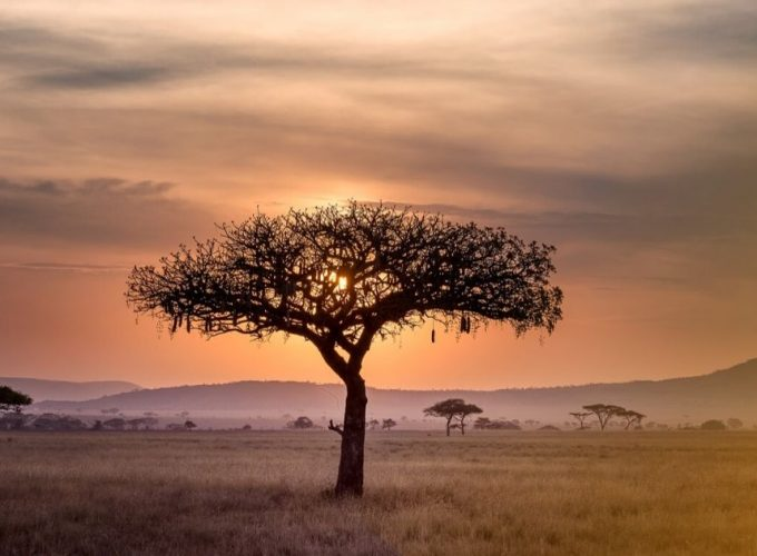 Find your African Adventure
