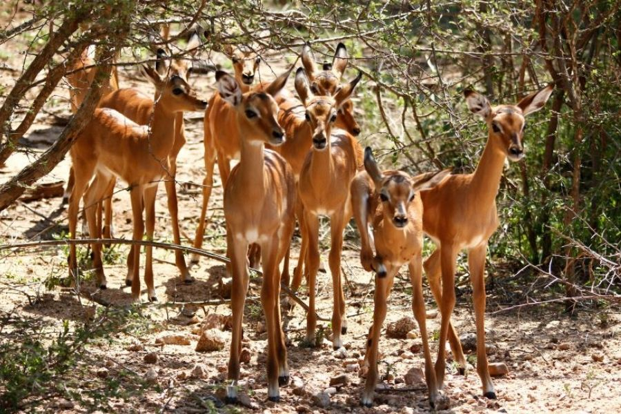 Day 7 - End of Safari Kasane