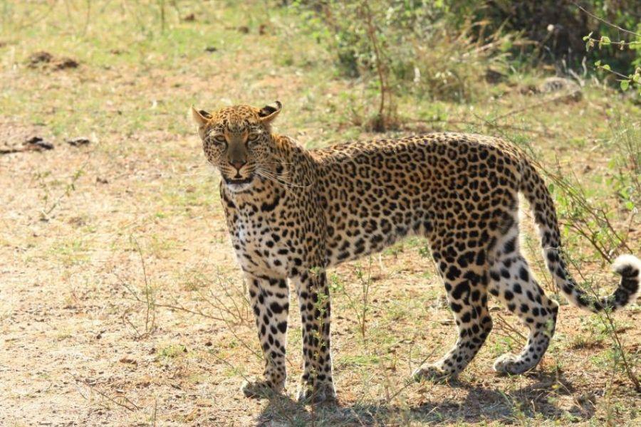 Day 2 - Kruger National Park (Pick Up Time: 04:45 am)