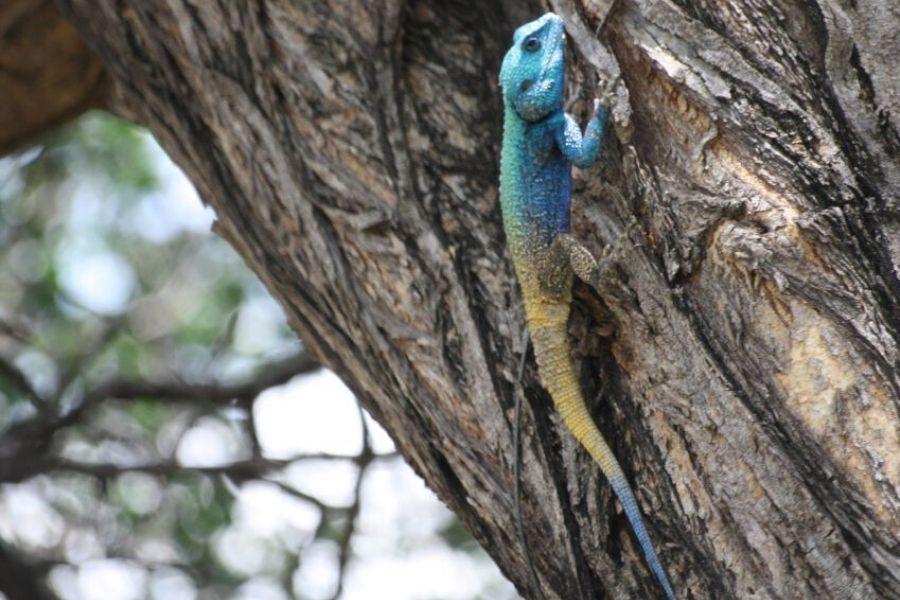 Day 7 - End of Safari in Kasane