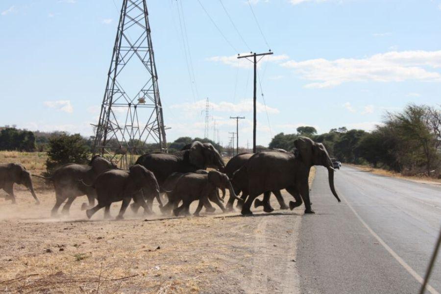 Day 6 - Safari Camp to Victoria Falls.
